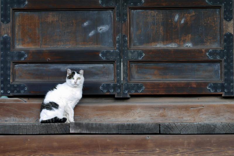 お堂扉前の白キジ猫1