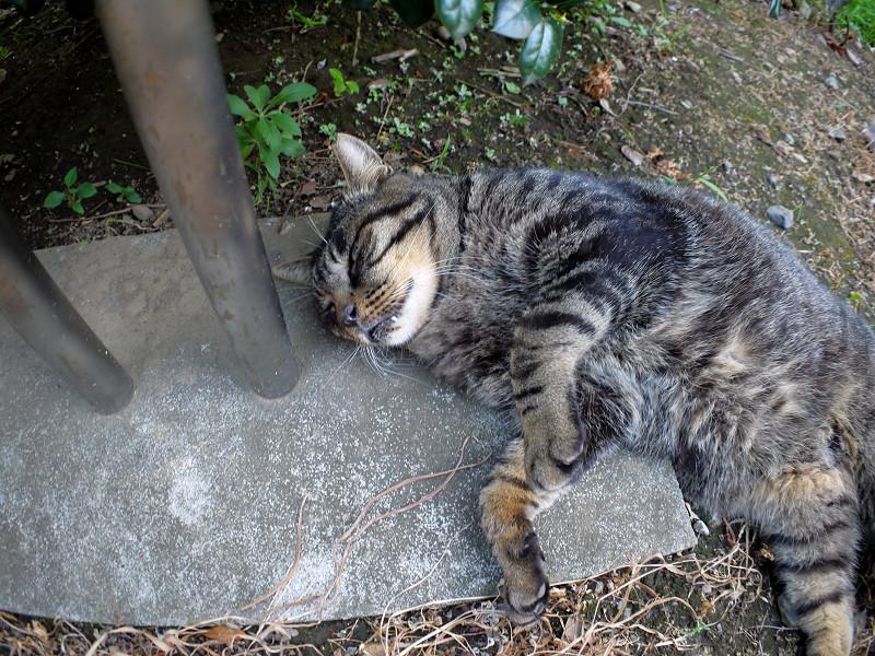 支柱と転がってるキジトラ猫2