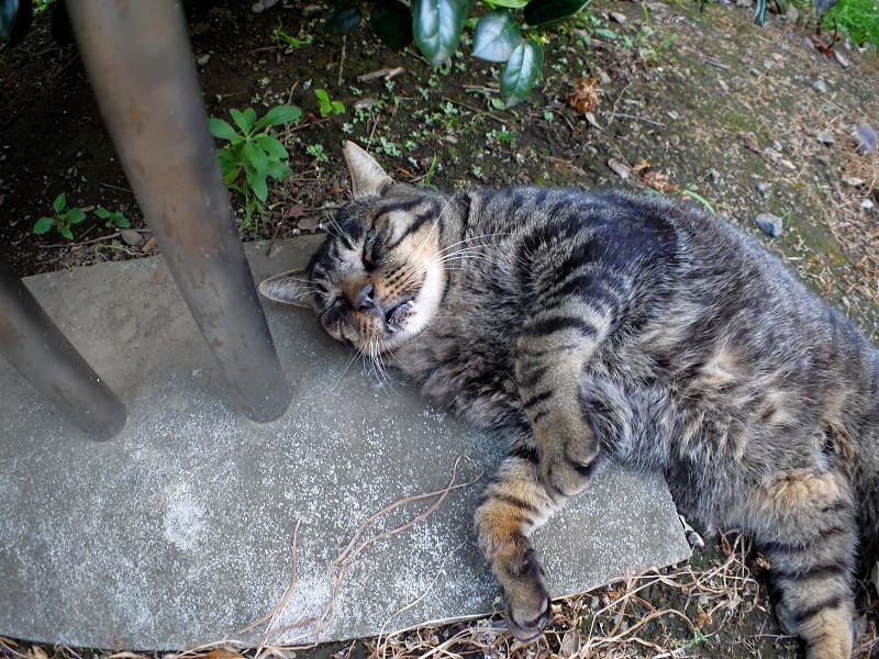 支柱と転がってるキジトラ猫3