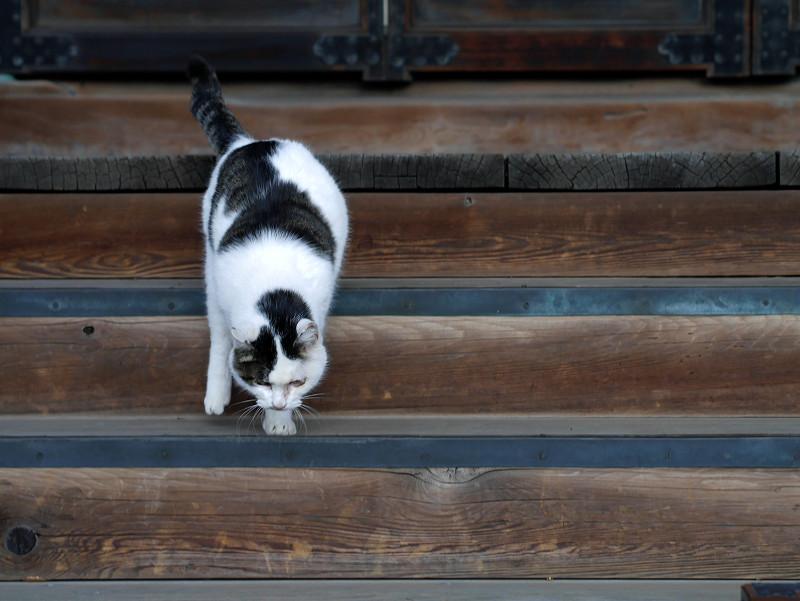 お堂扉前の白キジ猫3