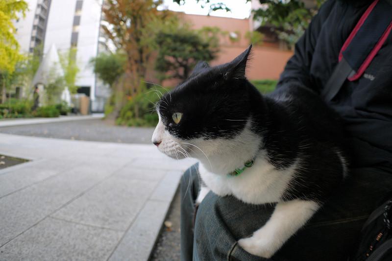 膝に乗っている黒白猫1
