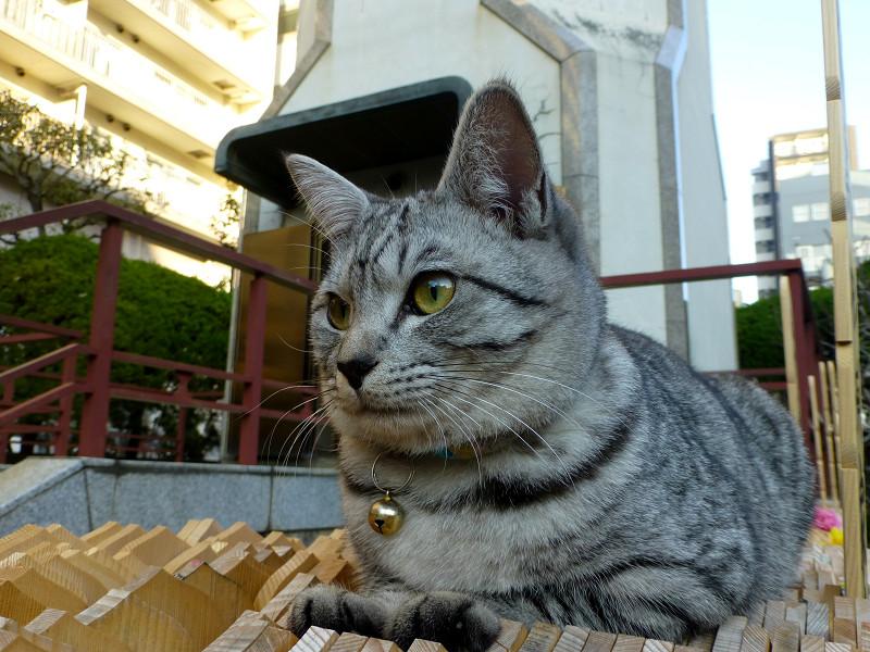 卒塔婆の上のサバトラ猫1