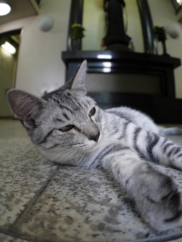 お堂でマッタリしているサバトラ仔猫2