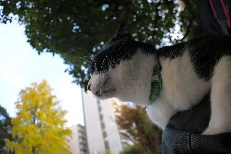 膝に乗っている黒白猫2