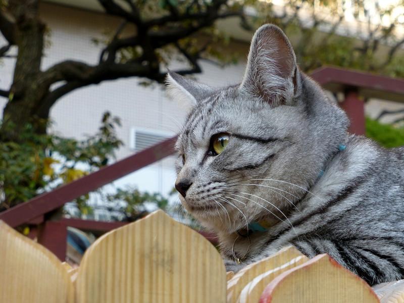 卒塔婆の上のサバトラ猫2