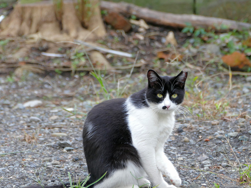 路地にいた猫たち1