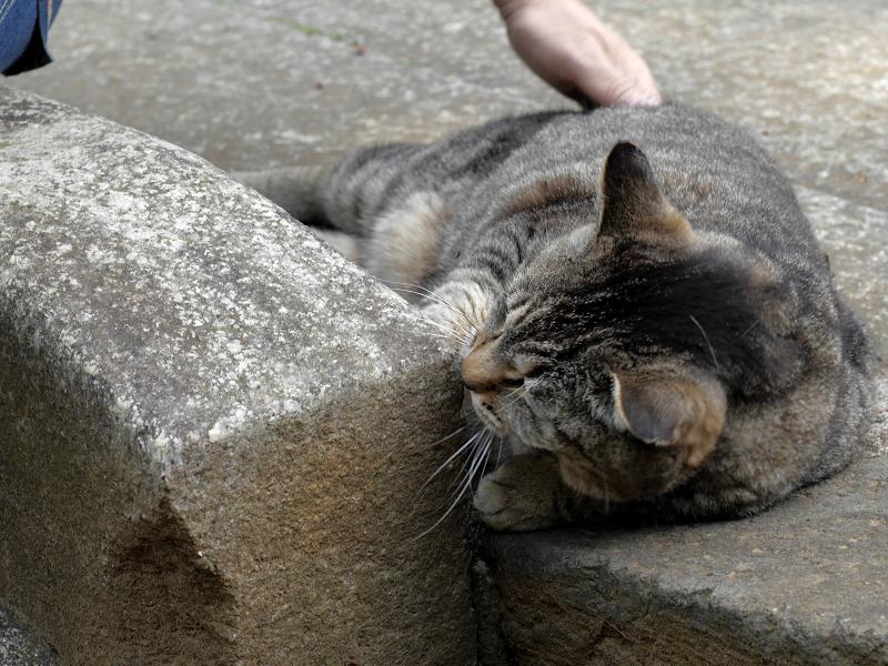 大興奮のキジトラ猫1