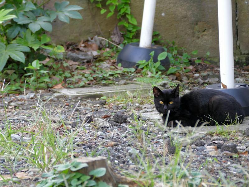 路地にいた猫たち2