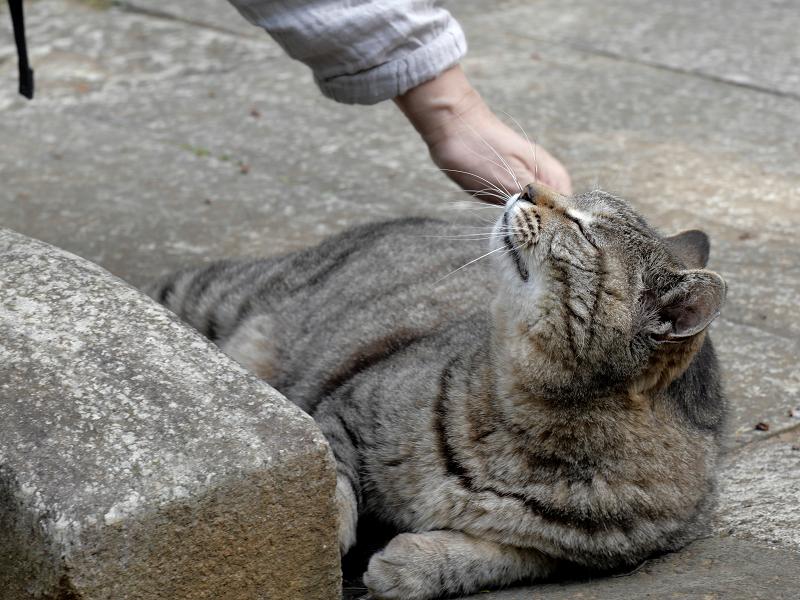 大興奮のキジトラ猫2