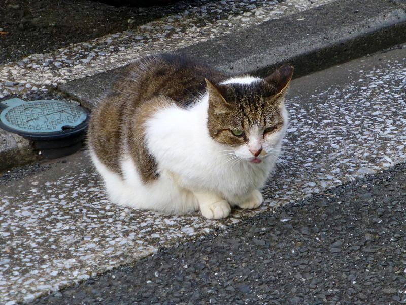 路地にいた猫たち4