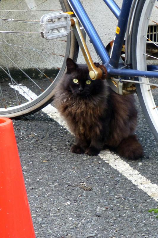 路地にいた猫たち5