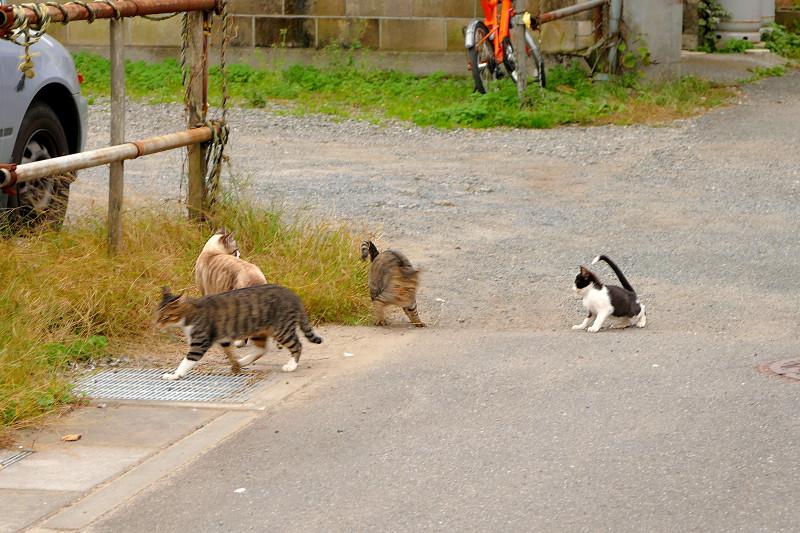 空き地に向かう親子猫1