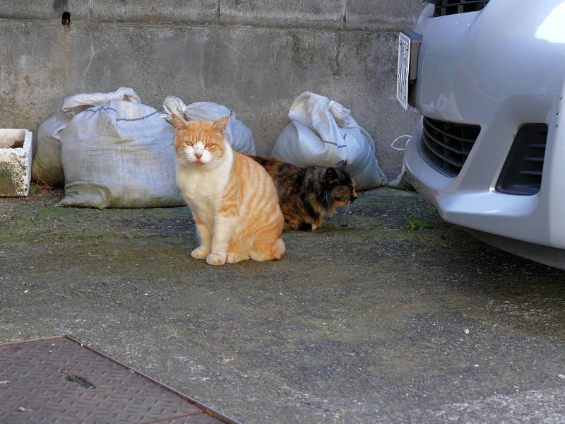 2匹で駐車場にいた猫たち1