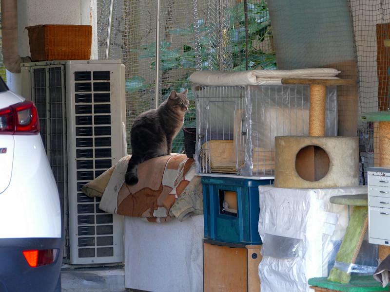 ガレージの猫2