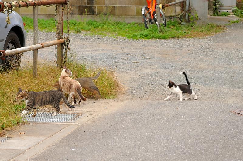 空き地に向かう親子猫2