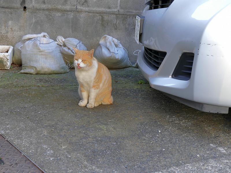 2匹で駐車場にいた猫たち2