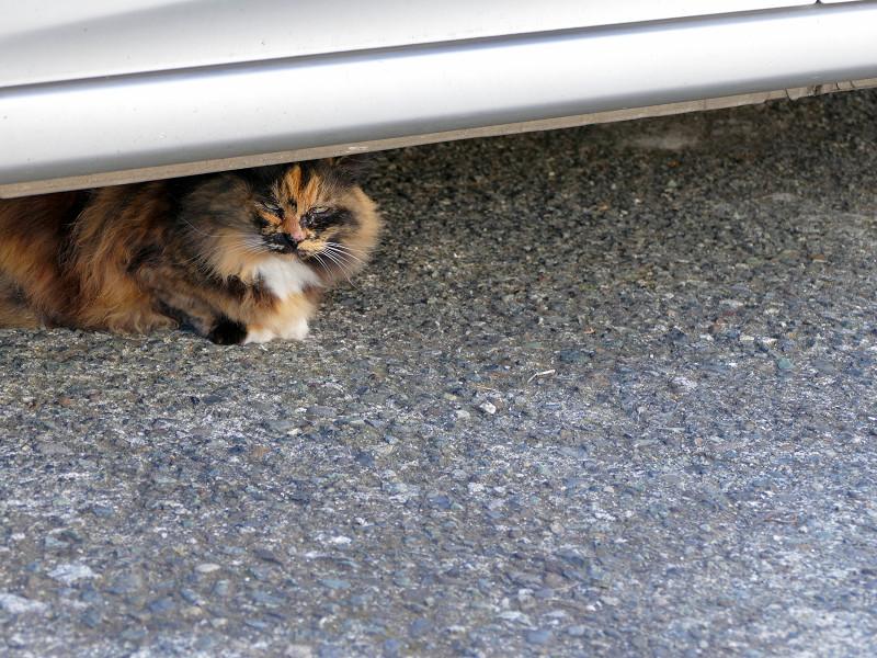 2匹で駐車場にいた猫たち3