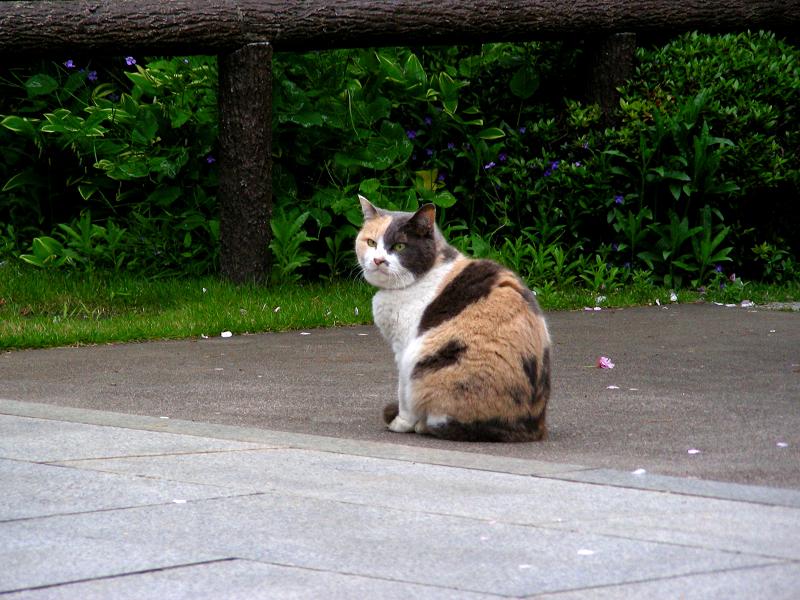 参道の三毛猫1