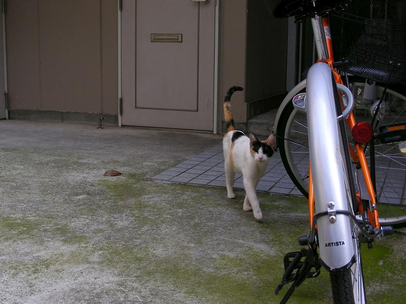 ソロリと近づいた三毛猫1