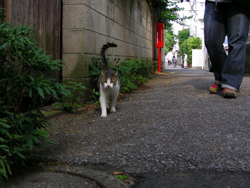 裏路地を歩くキジ白猫1