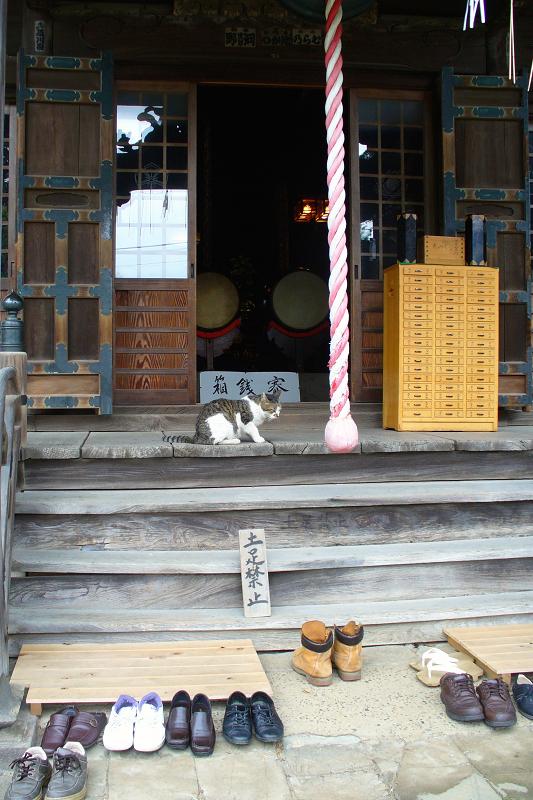 古いお堂とキジ白猫