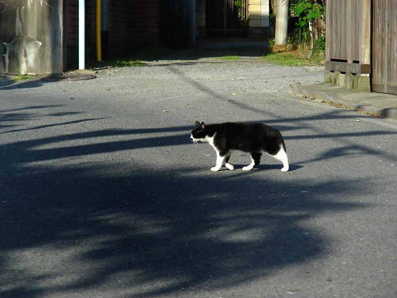 路地の黒白猫2