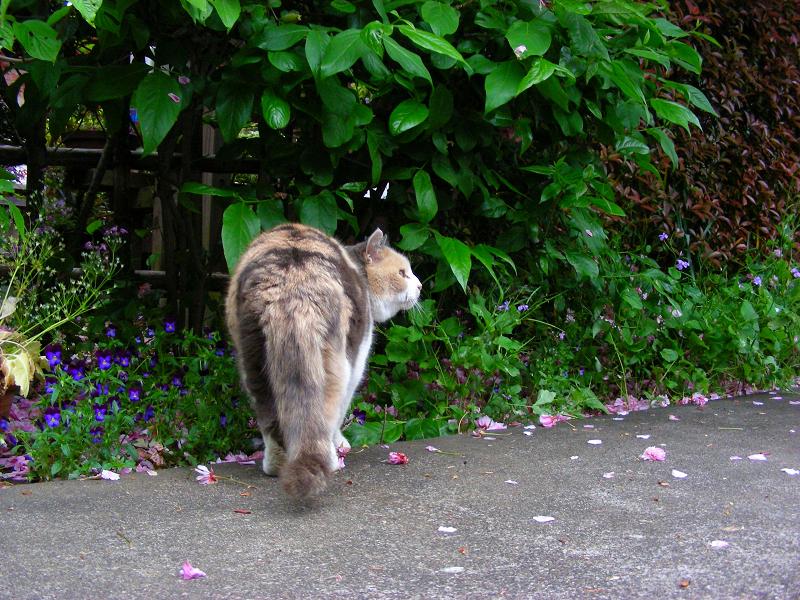 参道の三毛猫3