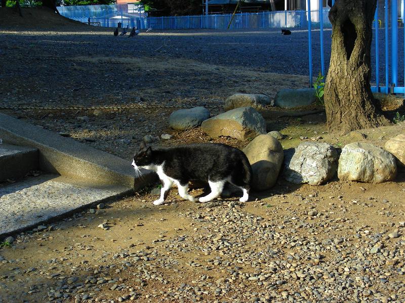 路地の黒白猫3