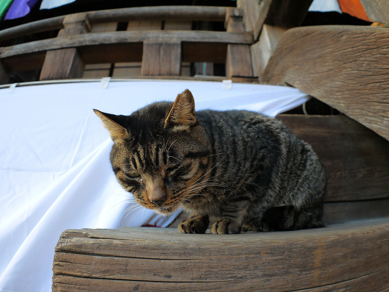階段の端のキジトラ猫1