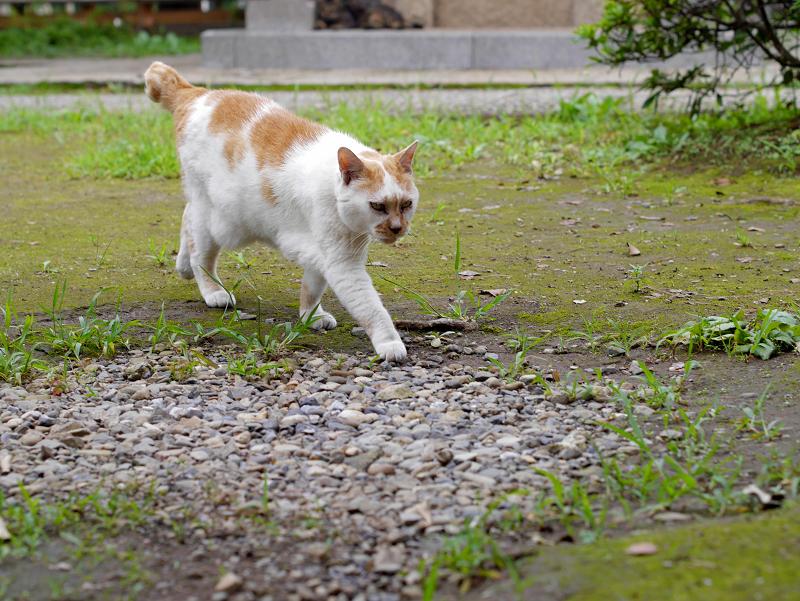 やっと登場の茶白猫2