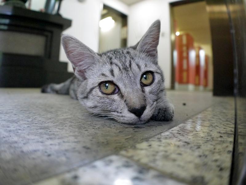 お堂内で横になっているサバトラ仔猫2