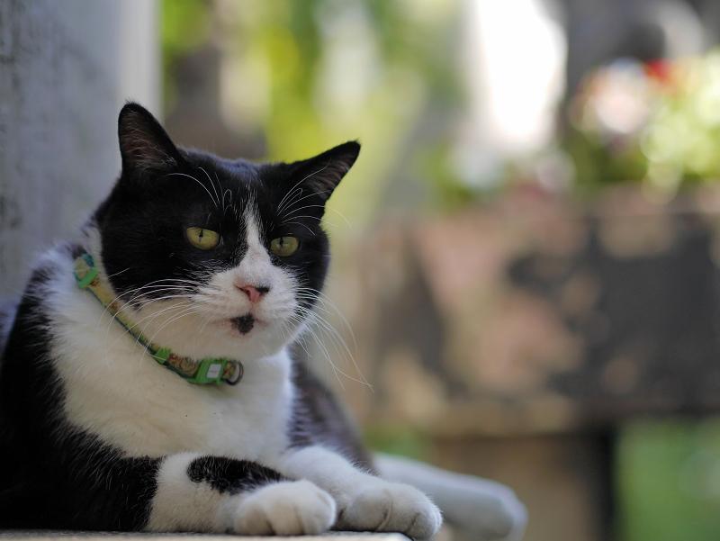 石碑の裏の黒白猫2