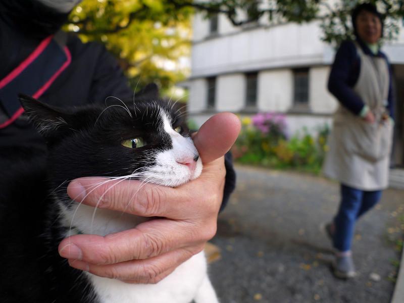 甘噛する黒白猫3