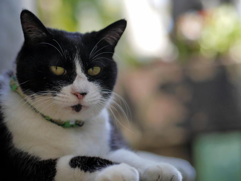石碑の裏の黒白猫3