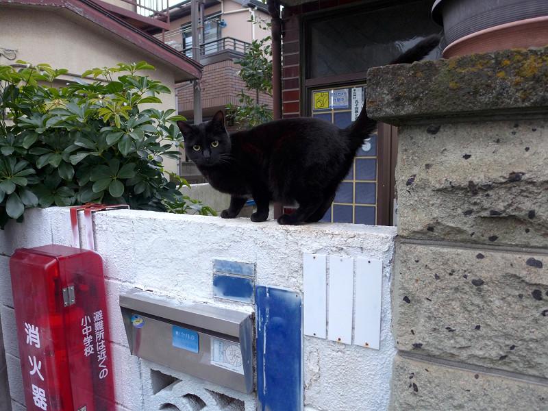白いブロック塀と黒い猫