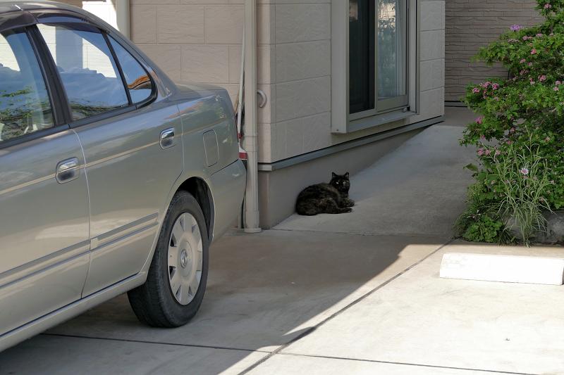 民家前のサビ柄猫1