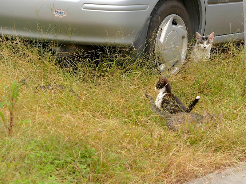 青空駐車場の猫たち1