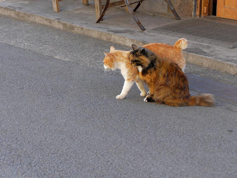 道路で仲良し猫1