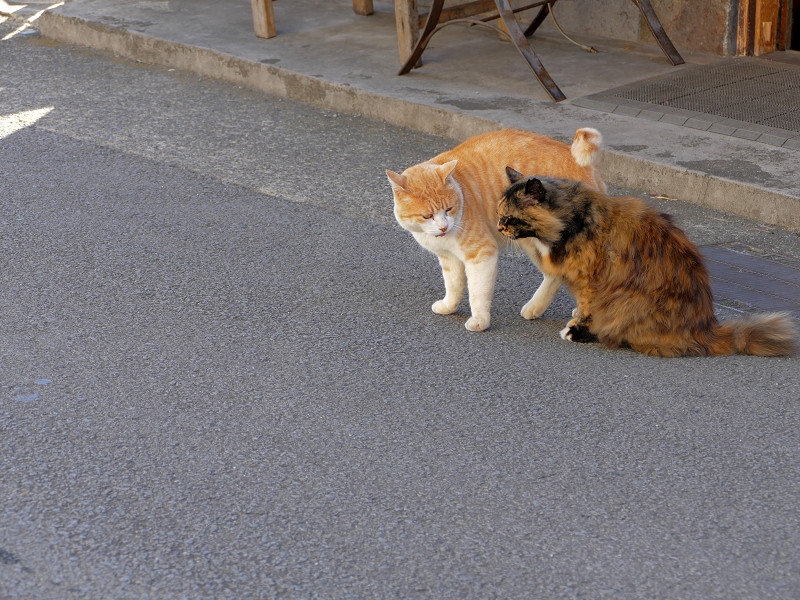 道路で仲良し猫2