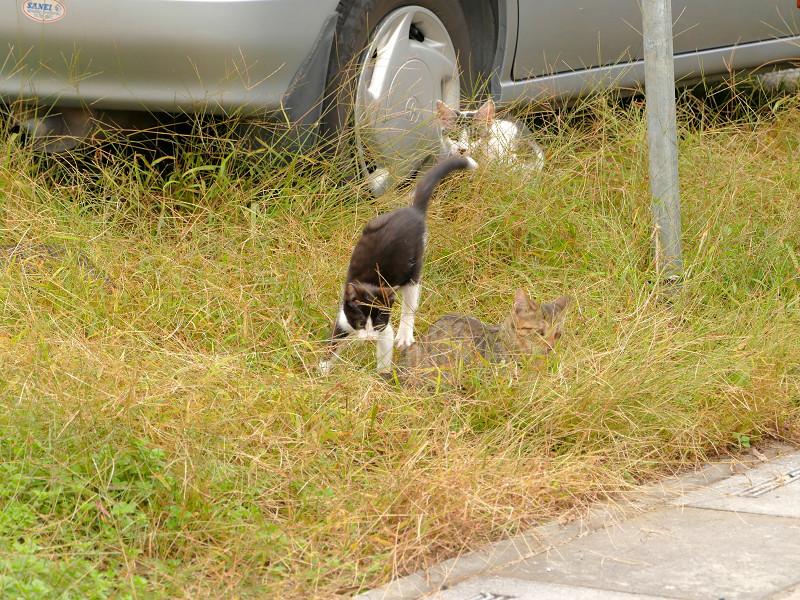 青空駐車場の猫たち3