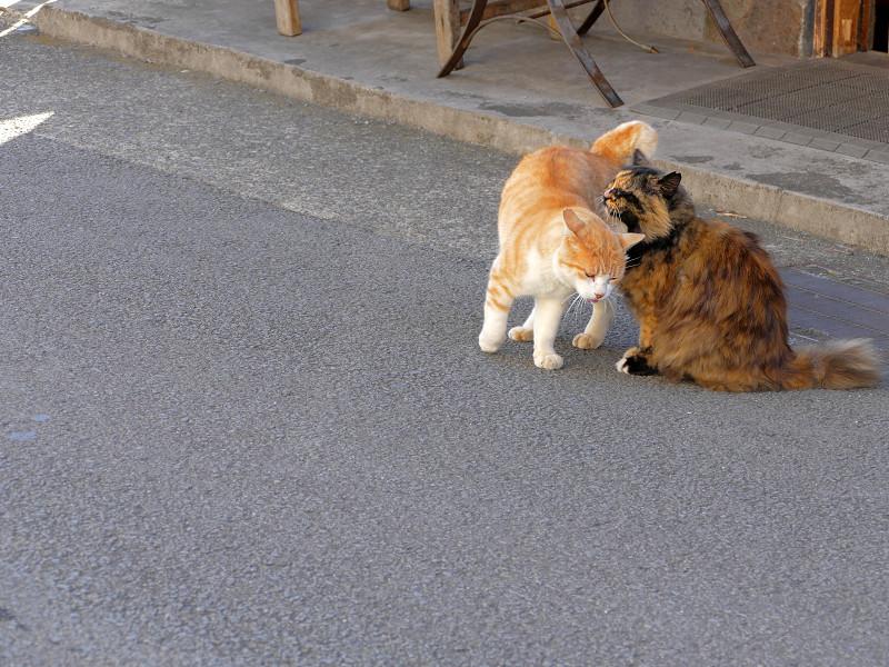 道路で仲良し猫3