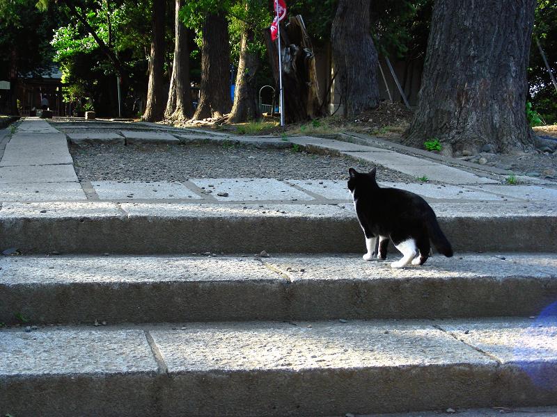 参道階段と黒白猫1