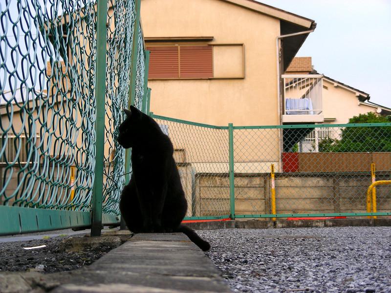 金網と黒猫1