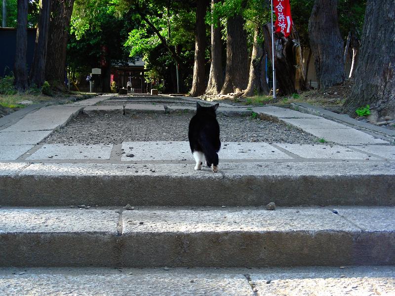 参道階段と黒白猫2