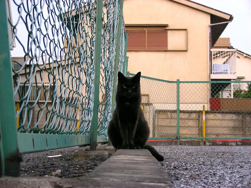 金網と黒猫2