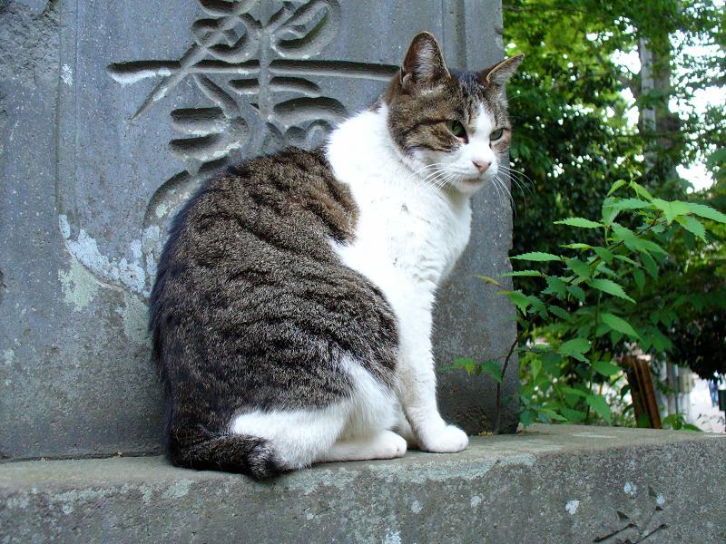 石碑に乗ってるキジ白猫2