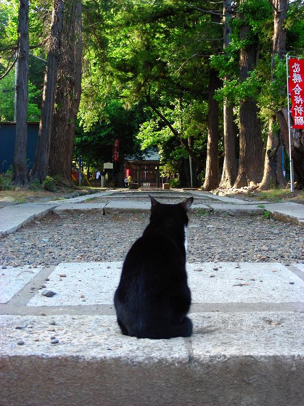参道階段と黒白猫3