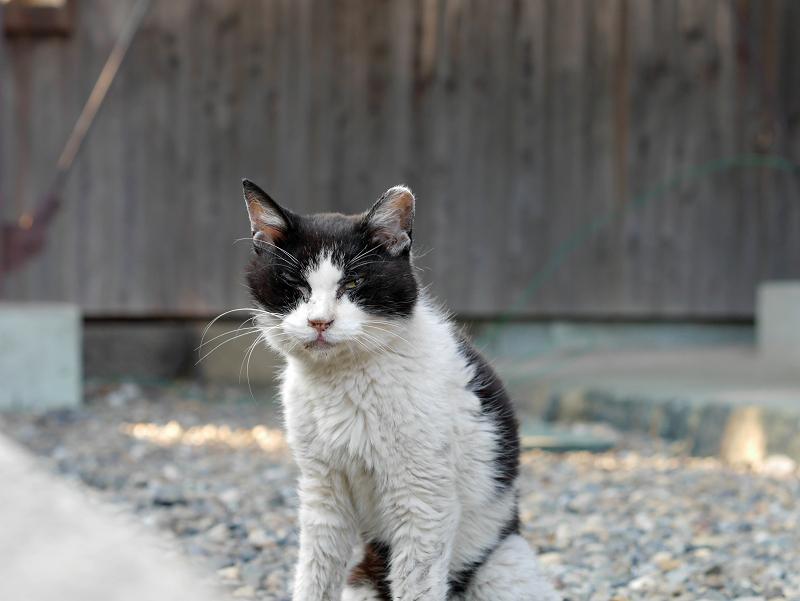 白黒母猫1