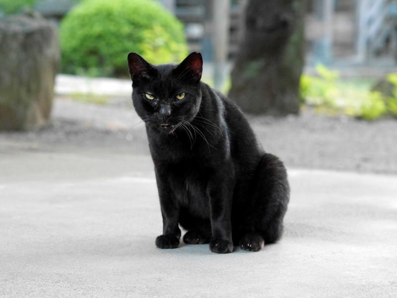 境内と黒猫1
