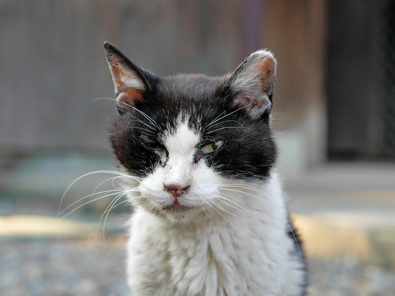 白黒母猫2